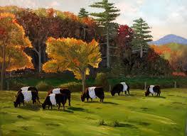 Koeien in Maine